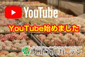 トロピカルガーデン youtube